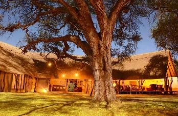 Under the acacia tree at Camelthorn Lodge - Hwange accommodation