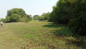 Upper Zambezi River property on the Zambian side of the river facing the Zambezi National Park.