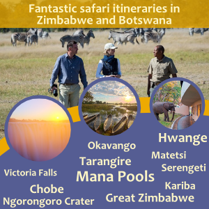 Safari ideas for Victoria Falls, Hwange, Okavango, Mana Pools, Kariba. Ask us for a custom itinerary