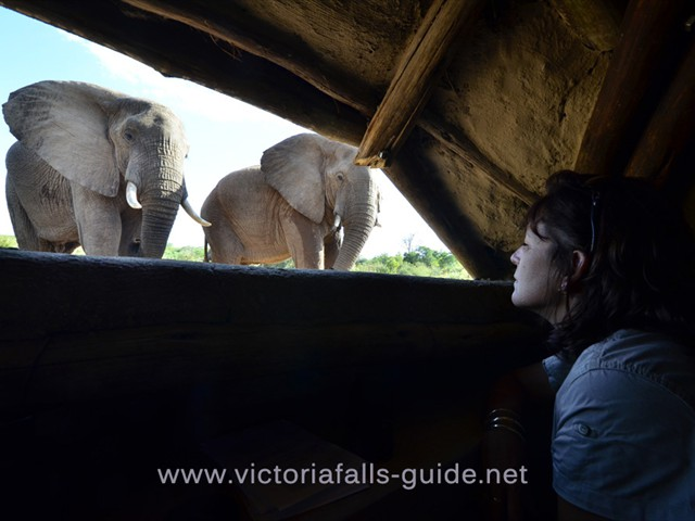 Siduli Hide in Victoria Falls, Zimbabwe. Save holiday time and book online.