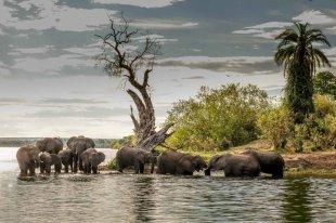 Photographic Safari in Victoria Falls on the Zambezi River