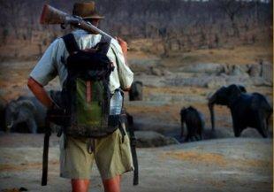 Walking Safari with professional guide - Zimbabwe