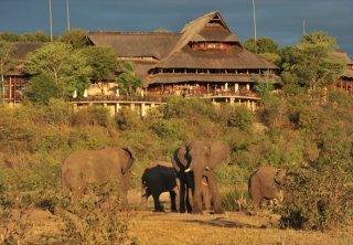Elephants at the waterhole at Victoria Falls Safari Lodge