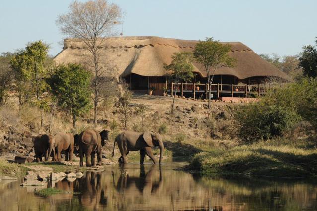 Elephants at The Wild Horizons Wallow - Victoria Falls Zimbabwe