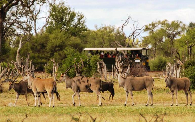 Kudu and the Elephant Express through HWange National Park, Zimbabwe
