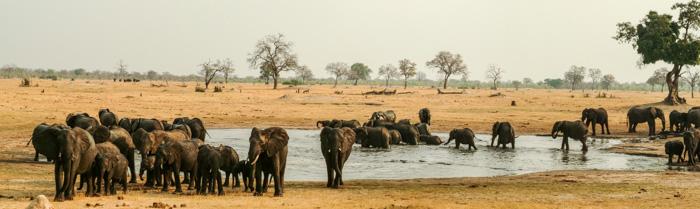 Large elephant herds at a waterhole in Hwange National Park, Zimbabwe