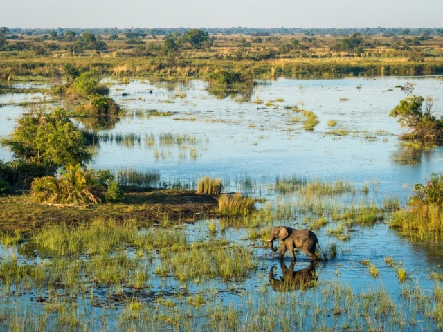 The Okavango Delta in flood - elephants island hopping - Botswana