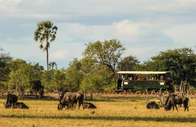 The Elephant Express in Hwange - wildebeest along the way