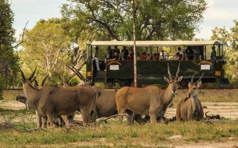 The Elephant Express in Hwange