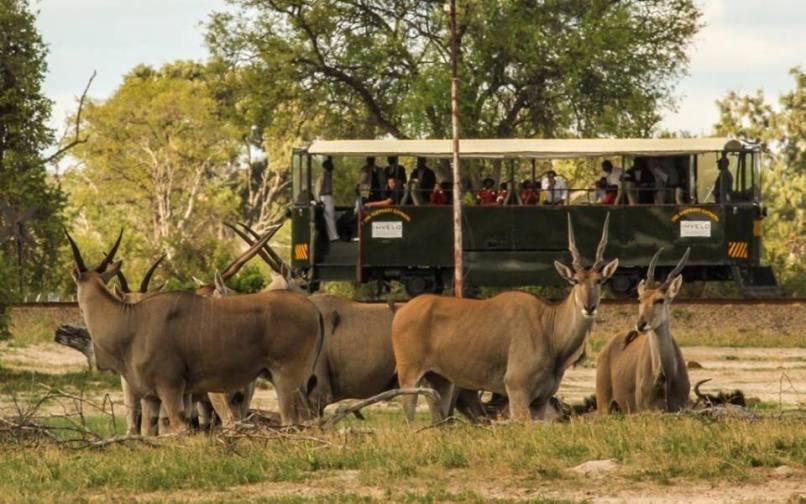 The Elephant Express in Hwange