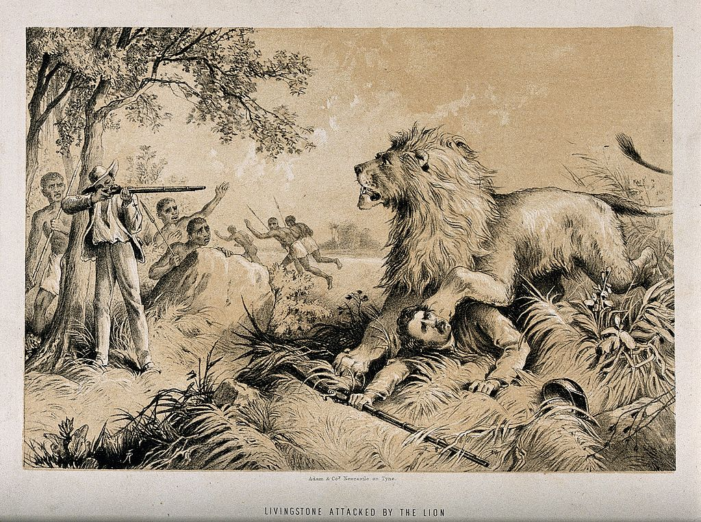 Dr Livingstone attacked by a lion