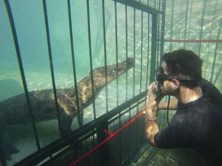 Croc cage diving Victoria Falls, Zimbabwe