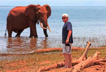 Musango Bull Elephant