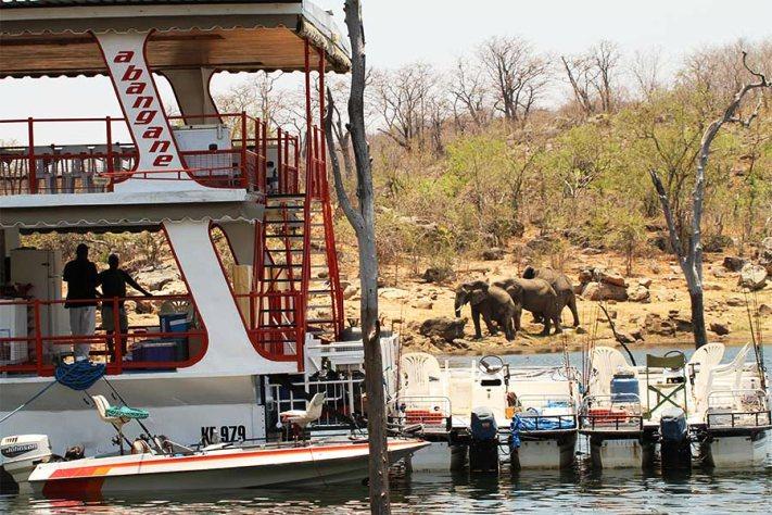 Elephants are a regular sight