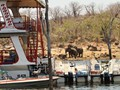 What a pleasure -boats and elephants