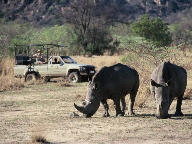 Big Cave Camp rhino tracking in matobo Zimbabwe