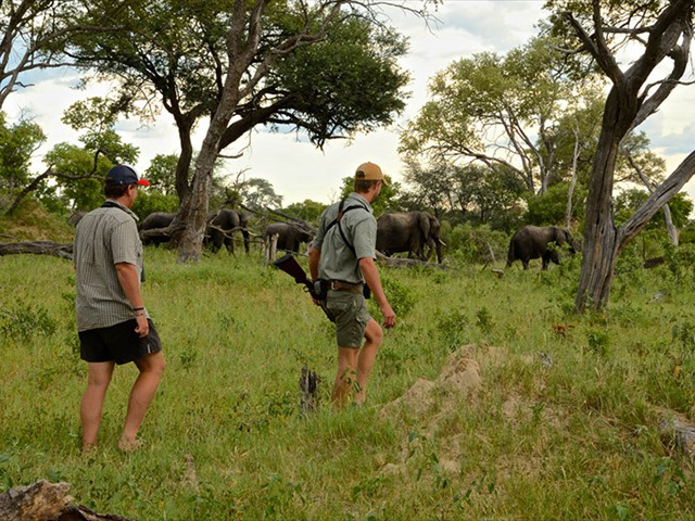 Game walk with a professional guide at Bomani Lodge in Hwange National Park - Zimbabwe