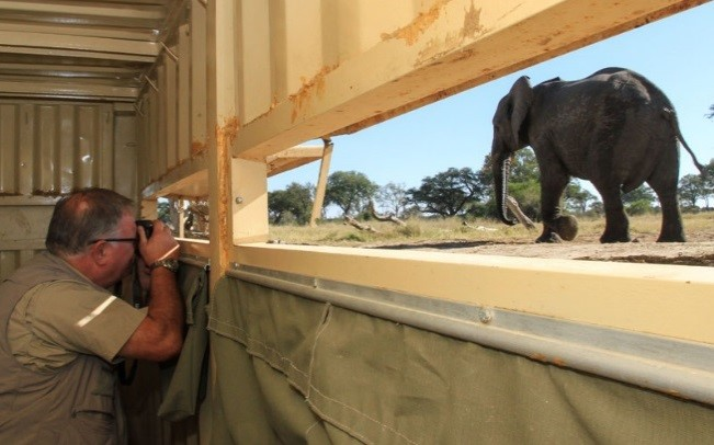 Game viewing in Hwange in a Bomani Lodge viewing blind - great for photography!