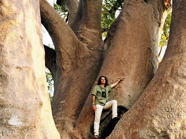 Chapmans Baobab tree near the Makgadikgadi Pans
