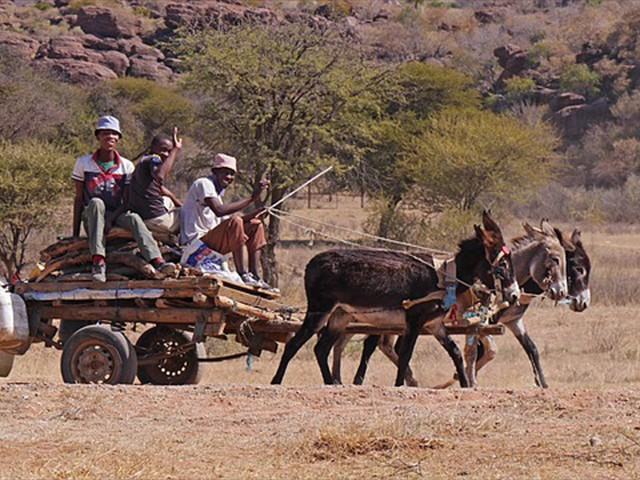 Donkey cart in rural Botswana