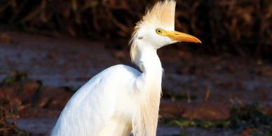 Bumi Hills Birding in Kariba