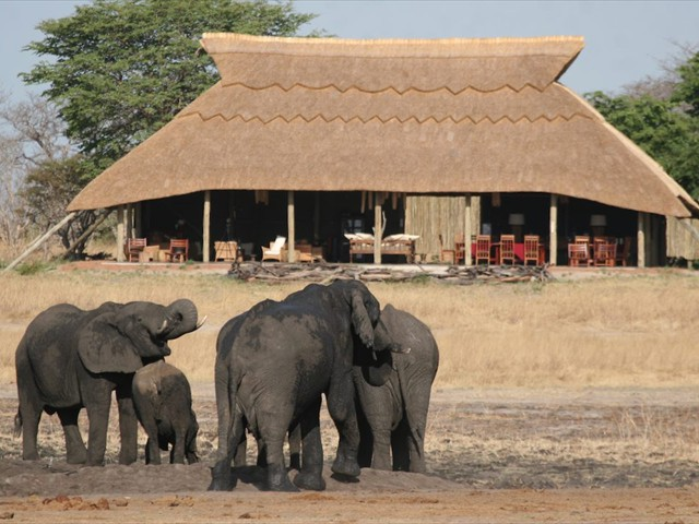 Elephants in front of Camp Hwange - Zimbabwe