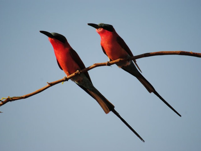 Birding safaris at Changa Safari Camp - Matusadona National Park, Lake Kariba
