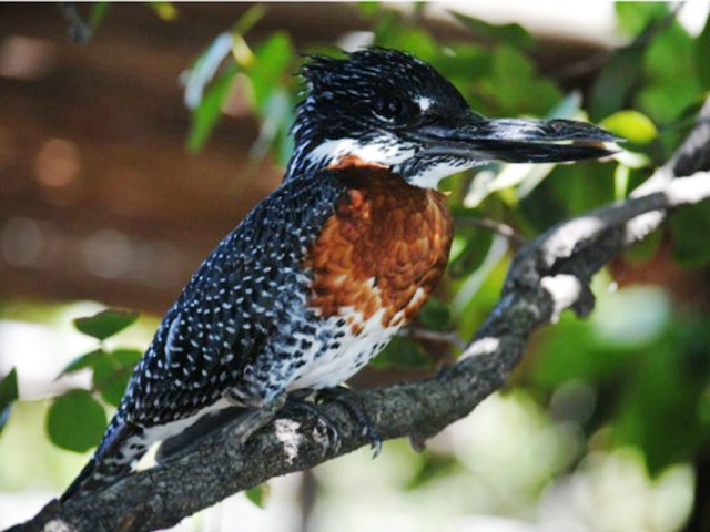 Lake Kariba birdlife