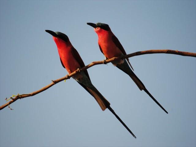 Activities include birding