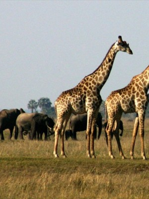 Chobe adventures plus a Victoria Falls safari activity, both at a special discount