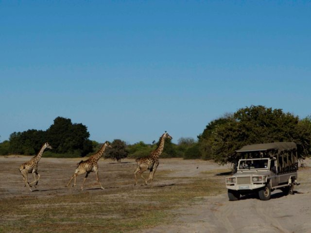 Game drives in Chobe National Park, Botswana