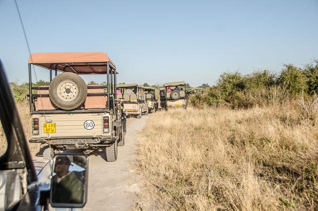Heavy traffic in Chobe National Park, Botswana