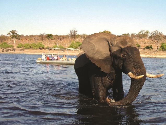 A private cruise on the Chobe River, Botswana