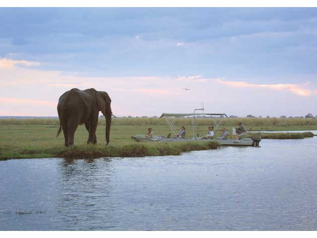 On a cruise on the Chobe River