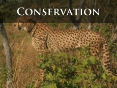 Conservation issues in Victoria Falls and the surrounding area