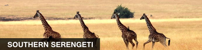 Destination South Serengeti, Tanzania