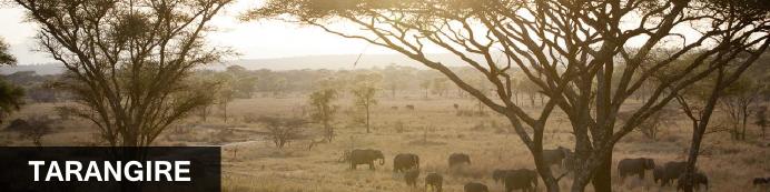 Destination Tarangire Park, Tanzania