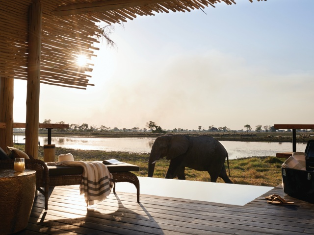 Elephant in front of the lodge at Eagle Island Lodge in the Okavango Delta - Botswana
