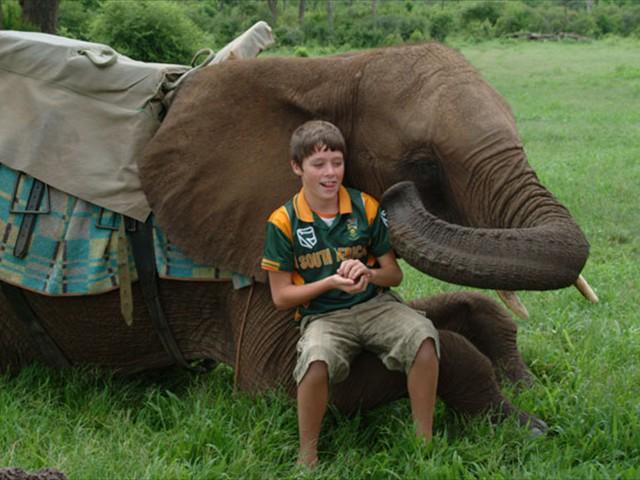 Our son feeding the elephant