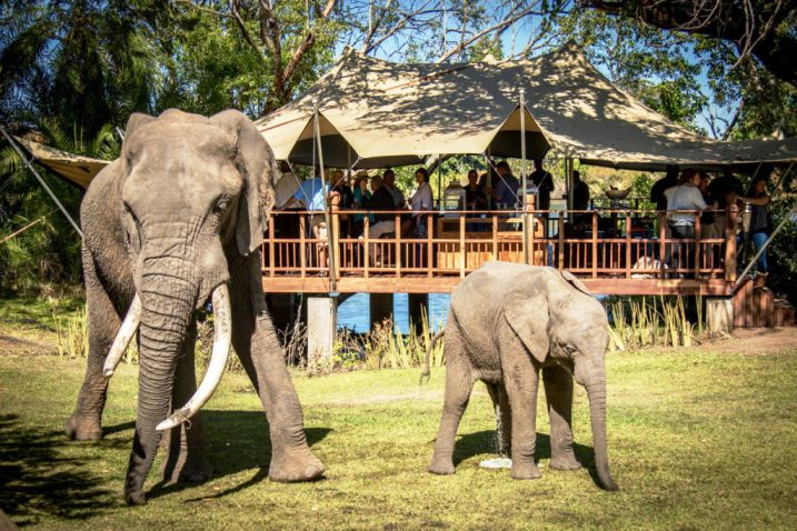 The Elephant Cafe along the Zambezi River, near the Victoria Falls, Zambia