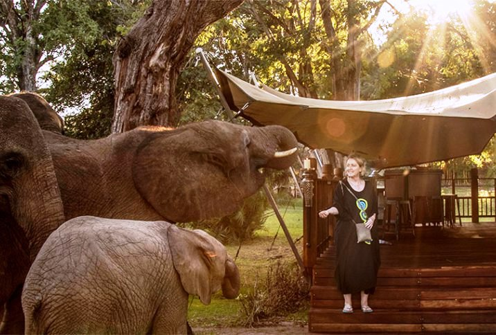 Elephant interaction at the Elephant Cafe in near Livingstone and the Victoria Falls, Zambia