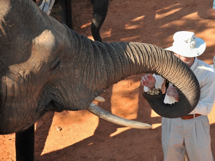 Guests meet and interact with elephants