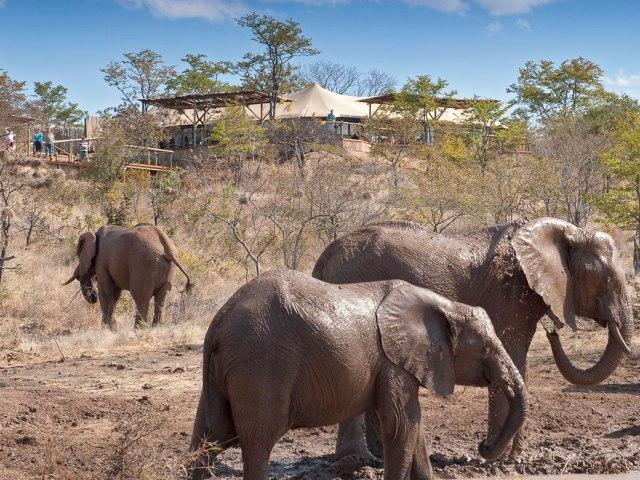 Elephant Camp - Victoria Falls, Zimbabwe