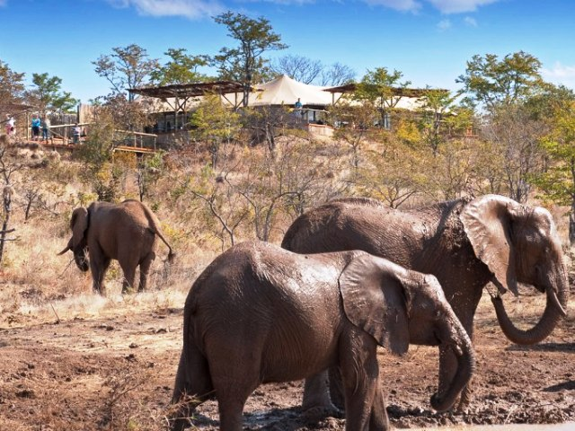 The Elephant Camp - Victoria Falls, Zimbabwe