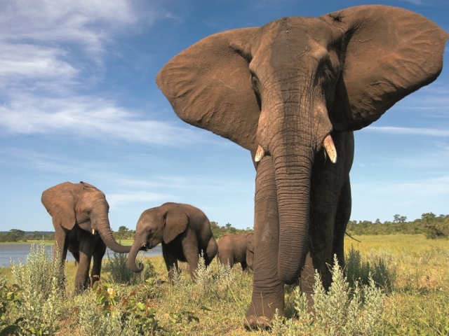 The elephant encounter in Victoria Falls, Zimbabwe