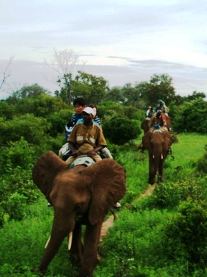 Watch incredible wildlife with these Victoria Falls activities in a discounted package