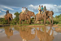 Elephant Safari in Victoria Falls