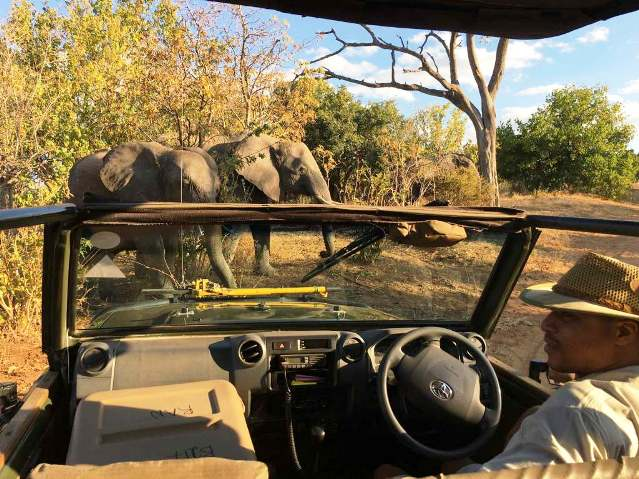 Elephant Valley Lodge game drive, Chobe National Park, Botswana
