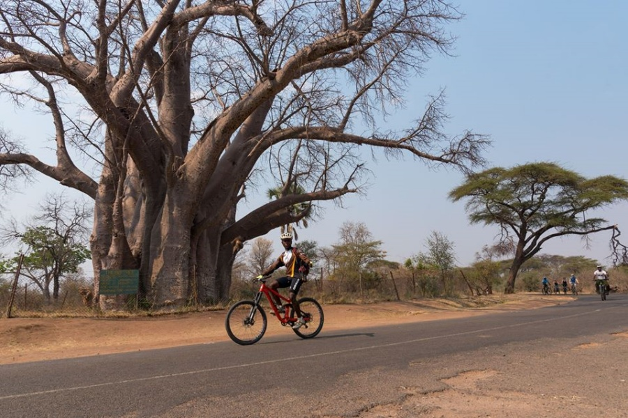 Visit the Big Tree baobab just outside the Victoria Falls town limits