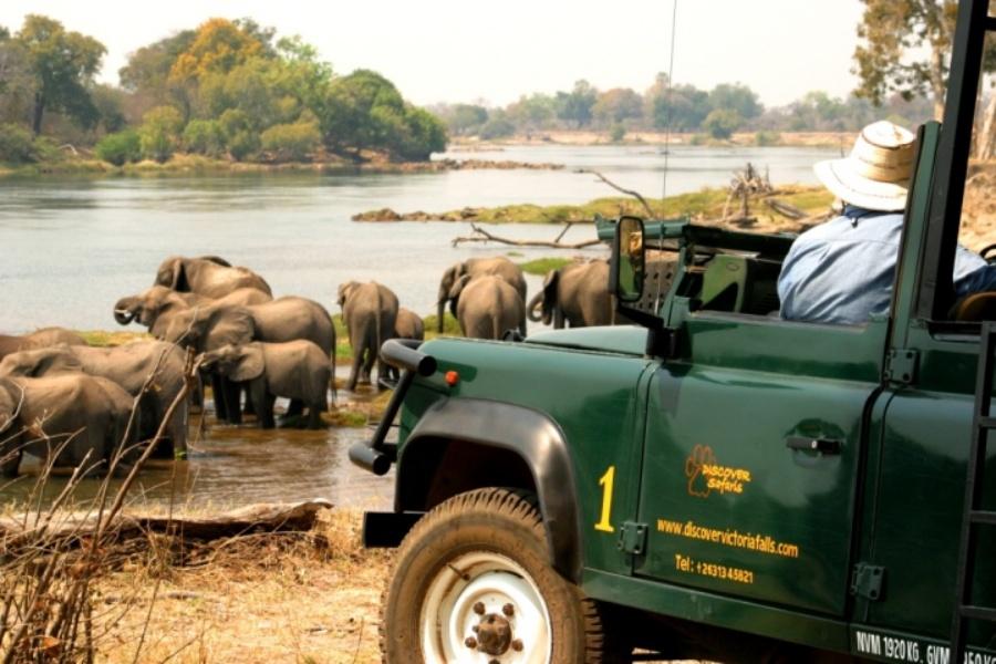 Elephants on the Zambezi River seen on a game drive in the Zambezi National Park near Victoria Falls, Zimbabwe